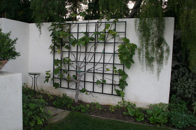 Garden metalwork long lasting trellis for Grid landscape design
