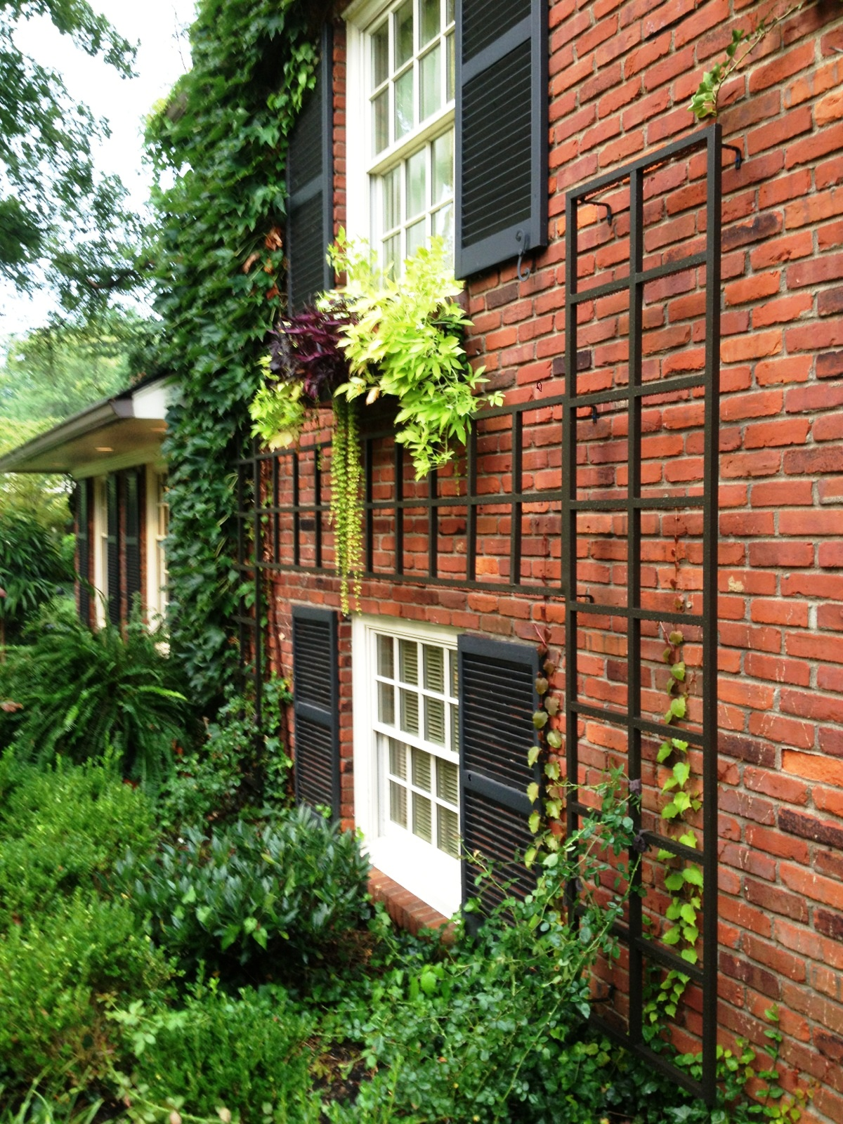 Trellis ideas for privacy - Vertical Gardening Aid