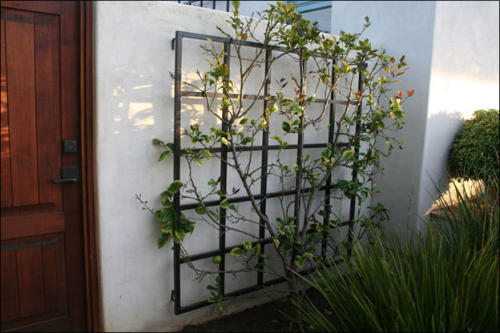 Wrought Iron Wall Trellis: Garden Metal Work
